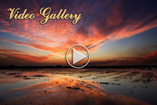 video-clip-gallery